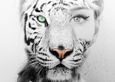 Line Drawing Of A Tiger S Face : Which animal do you transform into pixies photoshop and face