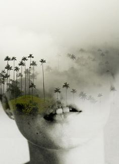 Kate palm/ Antonio Mora