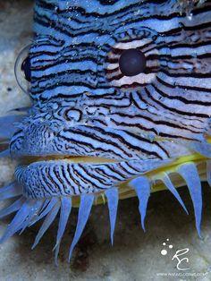 https://i.pinimg.com/736x/40/0a/30/400a306ebe02be8ea2b55038d83333e5--blue-hair-underwater-world.jpg