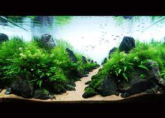 #ada 2009 susanna #aquascape