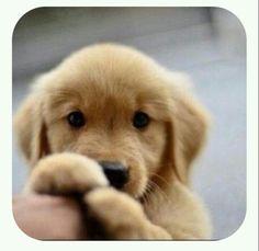 無辜的眼神~有時是安慰人的目光!! Innocent eyes - sometimes the to console gaze!!
