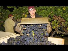 """J Vineyards & Winery, A Year in the Life – 2011    Watch our recap of a """"Year in the Life of J"""" and all the people who made it so special."""
