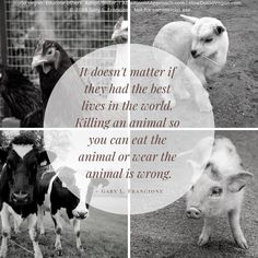 Compassion Quotes, Why Vegan, Wake Up Call, Animal Welfare, Animal Rights, Veganism, Going Vegan, Life Is Good, Animals