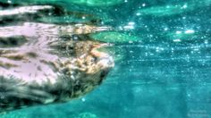 by Ernie Kasper Vancouver Aquarium, Stanley Park, Underwater Photography, British Columbia, Canada, Painting, Water Photography, Painting Art, Underwater Photos