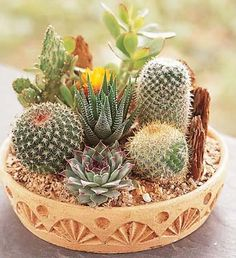 Interesting ideas for decor: Композиции из кактусов. Compositions of cactuses.