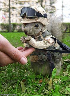 """""""Googled 'Marine Animals,' was not disappointed."""""""