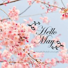 Hello May hello may blossom flowers Spring Months, Days And Months, May Days, Months In A Year, World Map Wallpaper, Cartoon Wallpaper, Neuer Monat, Monthly Quotes, Monthly Themes