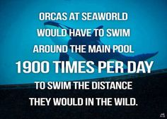 Save The Orcas: Anti-Captivity Platinum