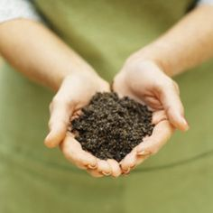 Dirt is healthy? A bacteria, Mycobacterium vaccae acts like an antidepressant once in our system.