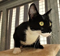 Nina is a curious cat! Come into the new Ipswich campus to meet her! http://bit.ly/2hQkr2p