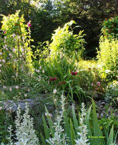Layers of plants in the rock garden | wallflowerstudio.wordpress.com