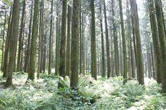 절물자연휴양림