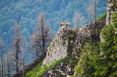 Ceahlau mountains - Romania Transylvania Romania, Wild Nature, Bucket, Explore, Mountains, Travel, Beautiful, Viajes, Destinations