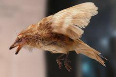 Hallan dos alas de aves que convivieron con dinosaurios