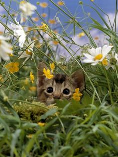 """""""A cat in grass is a tiger in the jungle."""" --British Proverb"""
