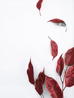 Fall soon plz Artistic Wallpaper, Painting Wallpaper, Plant Wallpaper, Fall Wallpaper, Wallpaper Backgrounds, Iphone Wallpaper, Wallpapers, Botanical Illustration, Illustration Art