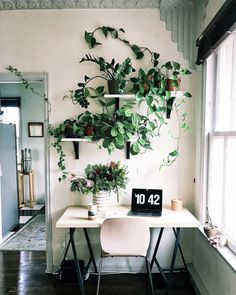 It's no secret that I am a plant addict. Not only do these big green beautiful things look good, but they also have incredible health benefits. Studies show, putting just one plant in your environment can: lower cortisol/stress levels reduce airborne toxins and dust particles regulate temperature re