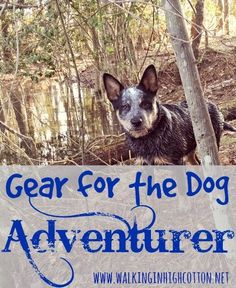 Have Dog, Will Travel...Gear for the Dog Adventurer