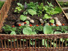 Alicia Paulson's raised garden. 'Twig' fencing.