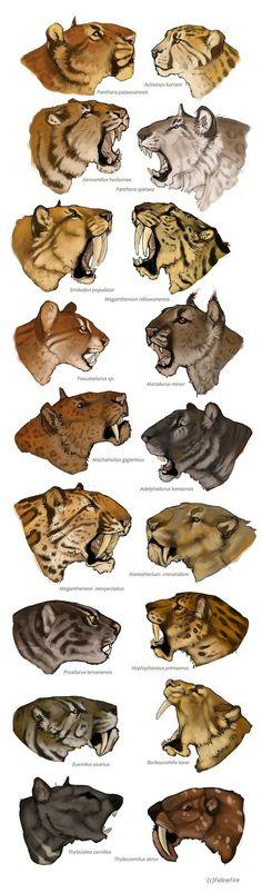 Evolution by FelineFire.deviantart.com: