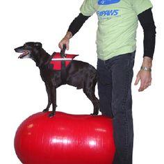 De FitPAWS Pinda is een stabiliteitsbal in de vorm van een pinda, ontwikkeld voor het trainen van de kernspieren van een hond. Het gebruikte pvc-materiaal is van professionele kwaliteit en speciaal voor honden ontworpen, voorzien van goede grip en bestand tegen schade door hondennagels.