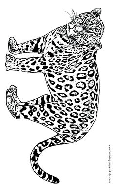 pin by barbara on coloring lion tiger pinterest - Coloring Pages Tigers Lions