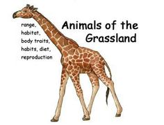 List of all the grassland animals, click for super detailed information about each one