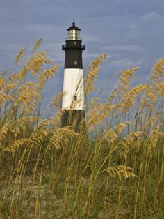 Lighthouse and Seaoats in Early Mooring, Tybee Island, Georgia, USA