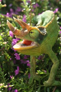 Trioceros jacksonii (common names Jackson's Chameleon or Three-horned Chameleon) is an African chameleon belonging to the chameleon family (Chamaeleonidae).