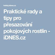 Praktické rady a tipy pro přesazování pokojových rostlin - iDNES.cz