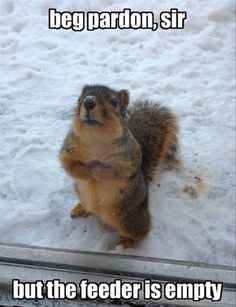 Omg squirrel.