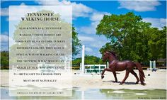 Our Winner's Circle Tennessee Walking Horse photographed by Dary Caballero