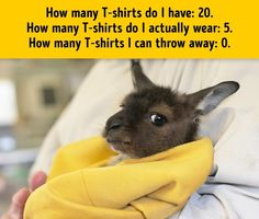 """A baby kangaroo. Little Babies, Cute Babies, Funny Images With Quotes, Baby Animals, Cute Animals, Kangaroo Baby, Baby Joey, Dangerous Animals, My Buddy"