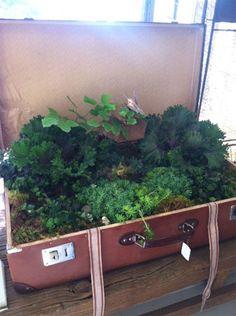 Mini garden in a suitcase! (As seen in Bachman's 2013 Fall Ideas House)