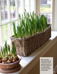 Nora Murphy Country House Seasons 2016 - Smart House - Ideas of Smart House - Our fabulous new magazine is filled with 200 pages of beautiful original photography and smart decorating gardening and entertaining tips.