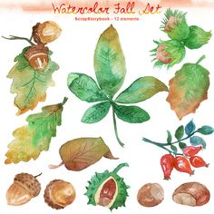Watercolor Fall Set  digital printable clipart   by Scrapstorybook, Ft1000.00