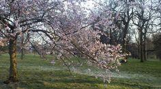 Inizia la primavera