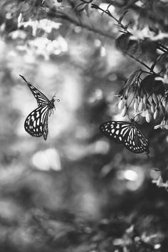 Bokeh Black and White Photography — cinderellas-stilettos: just my edit, not my...