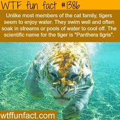 WHOA! - NOT a sight I'd like to SEE while swimming, ...on a HOT day ! - WTF! - NOT SO fun facts
