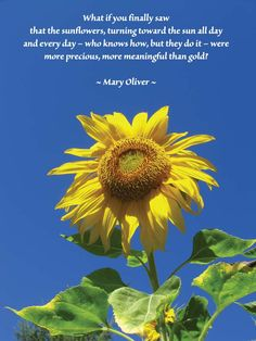 Sunflower Quotes Or Poems. Sunflower Poem, Sunflower Fields, Nature Quotes, Life Quotes, Funny Quotes, Peaceful Place Quotes, Peaceful Places, Charlie Brown Quotes, Inspirational Poems