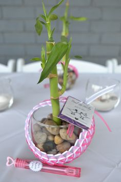 Bamboo plant wedding favors Isnt this supposed to be lucky