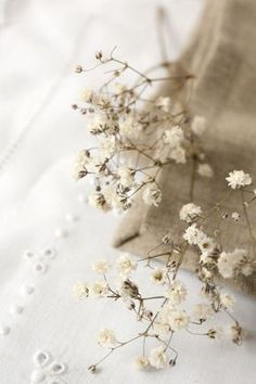 New flowers beautiful babies breath Ideas Cream Aesthetic, Boho Aesthetic, Flower Aesthetic, Aesthetic Collage, Aesthetic Vintage, Aesthetic Photo, Aesthetic Pictures, Aesthetic Fashion, Aesthetic Pastel Wallpaper