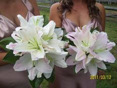 Maids bouquets of white and pale pink oriental lillies by Designer Bloom