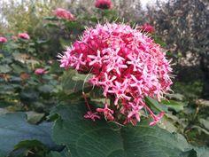 Strano antico fiore,  se potete dategli un nome