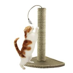Cat Scratching Post, Feather Toy *** Don't get left behind, see this great  product (This is an amazon affiliate link. I may earn commission from it)