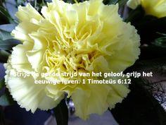 De goede strijd | Bemoedigende Bijbelteksten