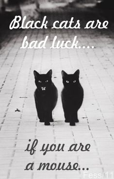 Oooh!! I love black cats!! And I think they're good luck!! Because,if you adopt  one,you have a new friend  And adopt a black cat! There's a ton at the shelter....if I could adopt a cat,I would like to get a black cat :3