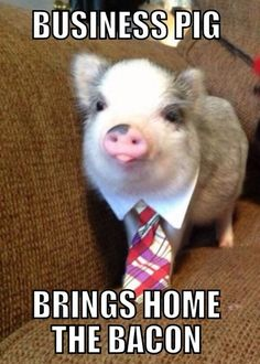 Like if you think Business Pig is cute.