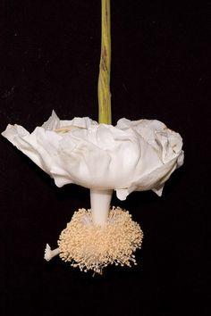 ~~ Baobab Flower ~~