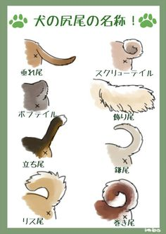what's the tail? Animal Sketches, Animal Drawings, Cute Drawings, Happy Animals, Animals And Pets, Cute Animals, Pose Reference Photo, Drawing Reference, Fox Dog